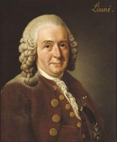 Carl Linné, născut Carolus Linnaeus, cunoscut după înnobilare drept Sunet Carl von Linné (n. 23 mai 1707 – d. 10 ianuarie 1778), a fost un botanist, medic și zoolog suedez.[R 1] Este considerat părintele taxonomiei și tatăl ecologiei moderne. Abrevierea numelui său în cărți științifice este L.. In imagine: Carl von Linné - portret de Alexander Roslin, 1775 - Expus la Academia Regală Suedeză de Științe - foto: en.wikipedia.org