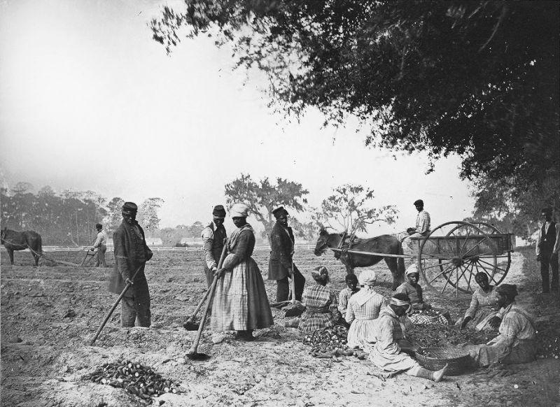 Sclavi pe o plantație de cartofi - foto: ro.wikipedia.org