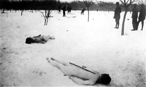 Rebeliunea legionară și Pogromul de la București (21-23 ianuarie 1941) - Cadavre de evrei în pădurea Jilava - foto preluat de pe ro.wikipedia.org
