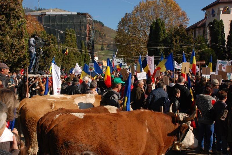 """Vaci şi boi din Apuseni vs. """"bizoni"""" din Parlament şi Guvern. Pe cine pariaţi? - Marea Adunare a Moților și citirea Proclamației de la Câmpeni (19 octombrie 2013) -foto -  Tudor Brădăţan (preluat de pe: voxpublica.realitatea.net)"""