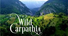 c238x128_Wild_Carpathia