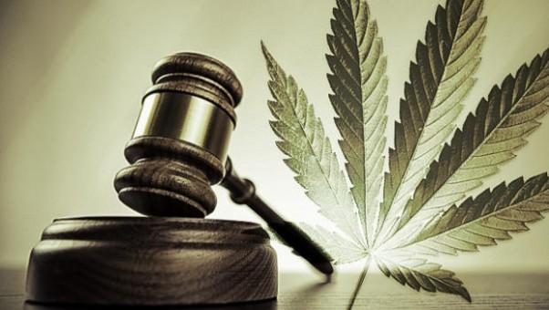legalizare canabis
