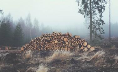 Păduri tăiate - foto - epochtimes-romania.com