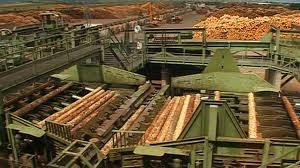 Holzindustrie Schweighofer  - foto riseproject.ro
