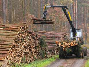 lemn-padure-publimedia-shutterstock