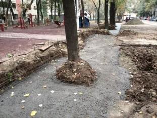 Copac betonat pe strada Intrarea Reconstrucţiei din sectorul 3, Bucureşti (Prietenii Parcului IOR, Facebook)