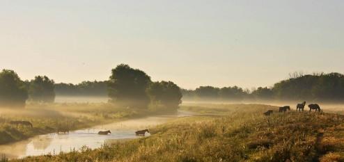 Delta Dunarii - foto - facebook.com/LiviuMihaiu.ro