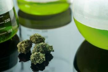 Marijuana - foto - totb.ro