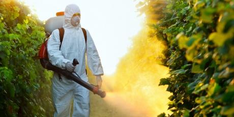 foto: avaaz.org