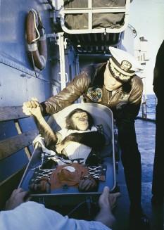 31 ianuarie 1961: Americanii il lanseaza pe o orbita circumterestra pe cimpanzeul Ham - foto: cersipamantromanesc.wordpress.com
