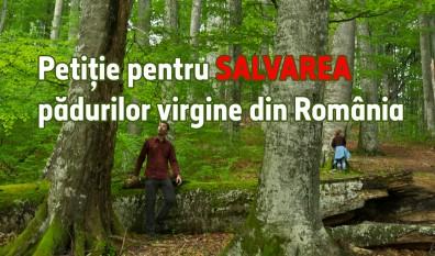 Petiție pentru SALVAREA pădurilor virgine din România - foto: agentgreen.ro