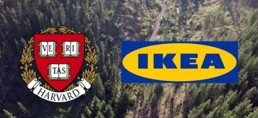 Harvard și Ikea, afaceri cu păduri traficate - foto: riseproject.ro