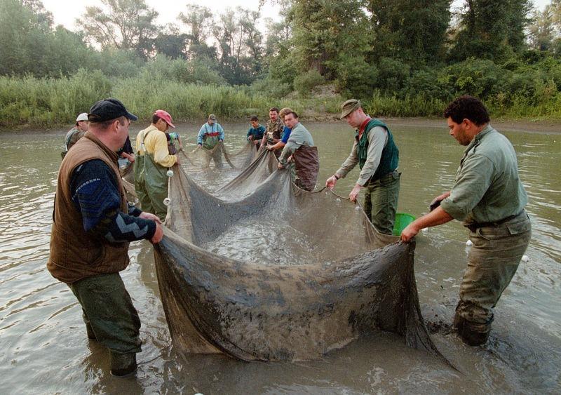 Voluntari activand in Tisa, in urma scurgerii de cianură de la Baia Mare (30 ianuarie 2000) - foto preluat de pe en.wikipedia.org