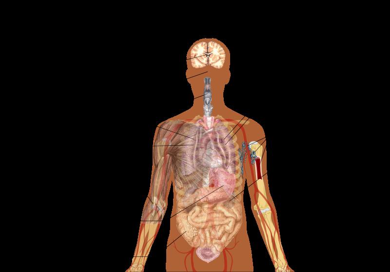 COVID-19 - Semne și simptome: tuse, rinită, febră, insuficiență respiratorie, cefalee, mialgie, epuizare, expectorație, hemoptizie, diaree, dispnee, limfopenie, sindromul detresei respiratorii acute, anemie - foto preluat de pe en.wikipedia.org